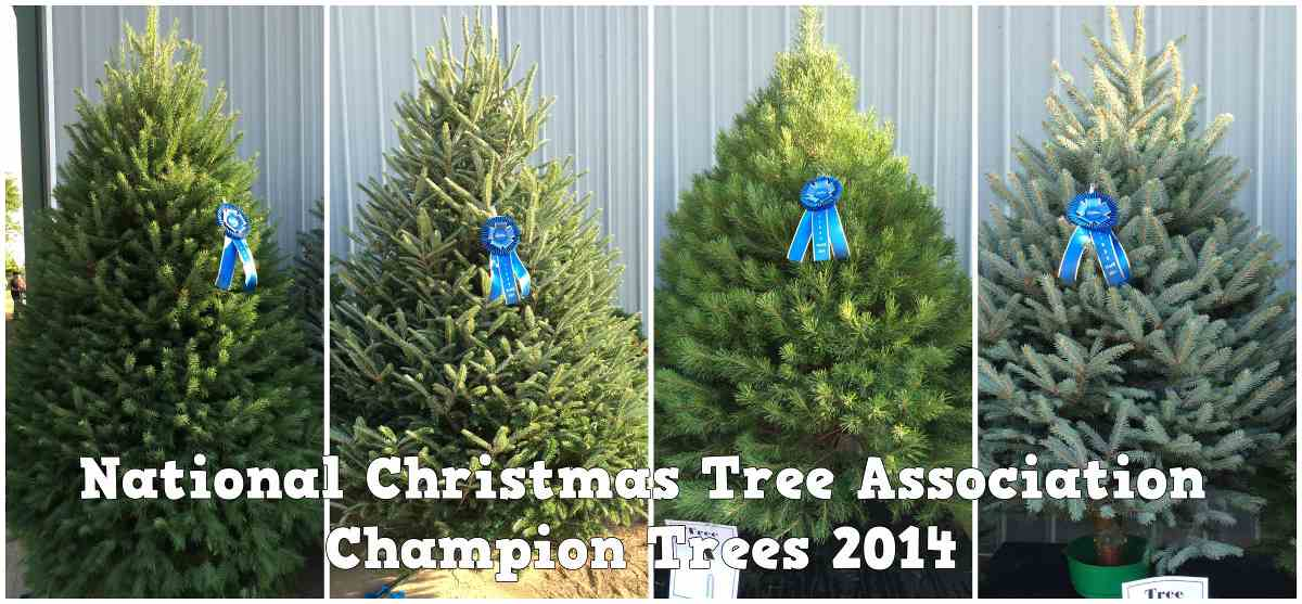 Here 39 S What An Award Winning Christmas Tree Looks Like